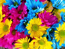 Free Flower, Yellow, Cut Flowers, Flowering Plant Stock Photo - 97359210