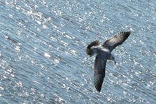 Free Water, Fauna, Bird, Seabird Royalty Free Stock Photo - 97360145