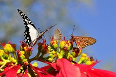 Free Butterfly, Moths And Butterflies, Insect, Brush Footed Butterfly Royalty Free Stock Image - 97360196