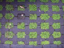 Free Verde Stock Photo - 97381380