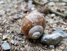 Free Snail, Natural Material, Wood, Shell Stock Images - 97381524