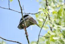 Free Oiseau &x28;Héron Vert&x29; 1121 Royalty Free Stock Image - 97381586