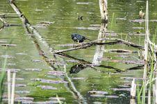 Free Oiseau &x28;Héron Vert&x29; 1099 Stock Photography - 97381602