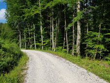 Free Plant, Road Surface, Tree, Wood Stock Photos - 97381683