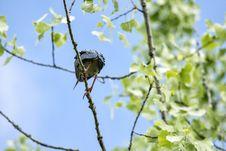 Free Oiseau &x28;Héron Vert&x29; 1119 Stock Photography - 97381692