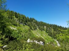 Free Bavarian Mountainside Forest Royalty Free Stock Photos - 97381728