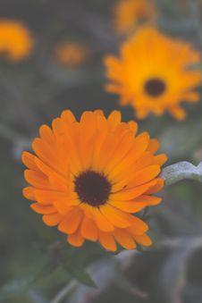 Free Colourful Swirley Bokeh Flowers Stock Photo - 97381730