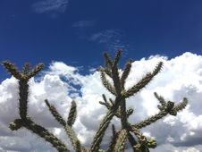Free Cholla And Sky Stock Photos - 97381763