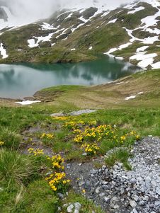 Free Yellow Flowers In Front Of Lake In The Swiss Alps Stock Photos - 97381793