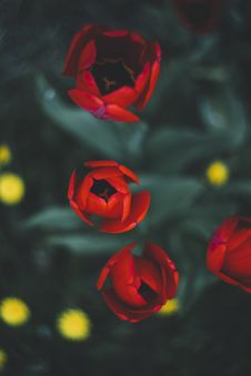 Free Colourful Spring Flowers Royalty Free Stock Images - 97381849