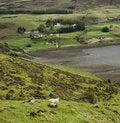 Free Sheep Royalty Free Stock Photography - 9745177
