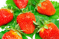 Free Strawberry Stock Photography - 9745272