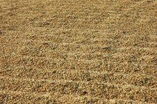 Free Many Rice Seed Stock Photos - 9742953