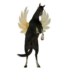 Free Black Stallion With Wings Royalty Free Stock Photos - 9744178