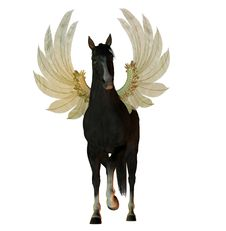 Free Black Stallion With Wings Royalty Free Stock Image - 9744236