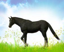 Free Free Black Stallion Stock Photo - 9744540