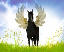 Free Black Stallion With Wings Royalty Free Stock Images - 9744609