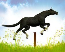 Free Jumping Black Stallion Royalty Free Stock Photo - 9744715
