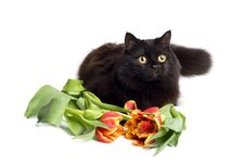Free Black Cat And Flowers Isolated Royalty Free Stock Photo - 9745525