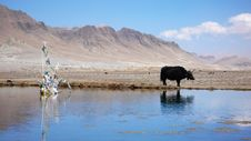 Free Yak At Waters Royalty Free Stock Images - 9746379