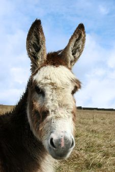 Free Head Donkey Stock Photo - 9746600
