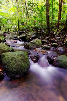 Free Rapids In A Forest Stock Photos - 9747883