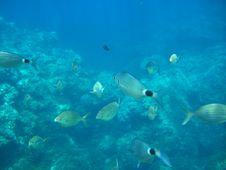 Free Shoal Of Fish Royalty Free Stock Photos - 9748338