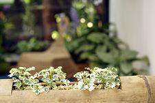 Free Decorative House Plants Stock Image - 9749281