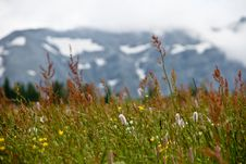 Free Closeup Of Wild Mountain Field Stock Images - 9750864