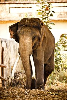 Free Elephant Outside Royalty Free Stock Photography - 9751207