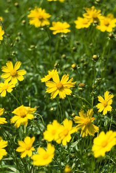 Free Yellow Flower Stock Images - 9753744
