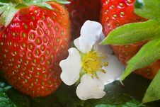 Free Strawberries Stock Images - 9753954