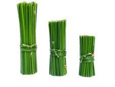 Free Green Columns Stock Image - 9754001