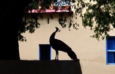 Free Peacock Silhouete Stock Photos - 9754203