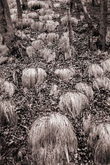 Free Dry Grass In Wood Royalty Free Stock Photo - 9754225