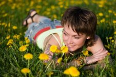 Free Dandelions Glade Stock Photography - 9754632