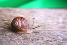 Free Garden Snail Royalty Free Stock Photography - 9754937