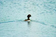 Free Birds Royalty Free Stock Photography - 9755067