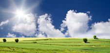 Free Blue Sky And Green Field Royalty Free Stock Photography - 9755647