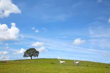 Free Summer Landscape Beauty Stock Photos - 9756323
