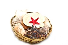 Free Sea Shells Stock Photography - 9756712