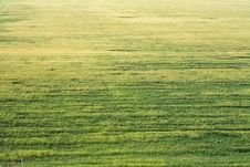 Free Crop Field Stock Images - 9756894