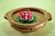 Free Lotus Fortune Plant Royalty Free Stock Photography - 9757977