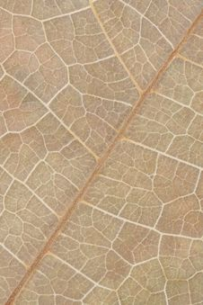 Free Leaf Macro Stock Images - 9758864