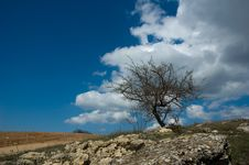 Free Single Tree Stock Image - 9759131
