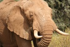 Free Head Elephant Stock Image - 9759251