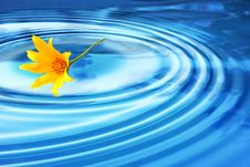 Free Flower On Water Royalty Free Stock Photo - 9759455