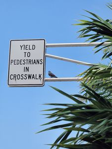 Free Yield To Pedestrian Stock Photo - 9759630