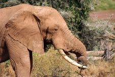 Free Elephant Eating Stock Photography - 9759812