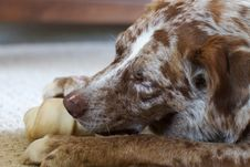Free There S Nothing Like The Smell Of Rawhide In The Morning Stock Photography - 97537462